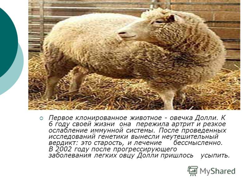 Первое клонированное животное - овечка Долли. К 6 году своей жизни она пережила артрит и резкое ослабление иммунной системы. После проведенных исследований генетики вынесли неутешительный вердикт: это старость, и лечение бессмысленно. В 2002 году пос
