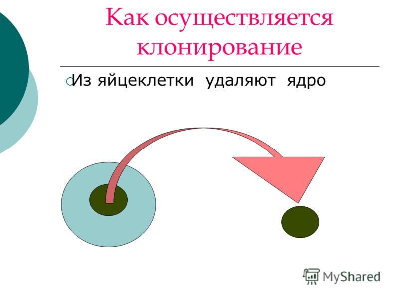 Как осуществляется клонирование Из яйцеклетки удаляют ядро