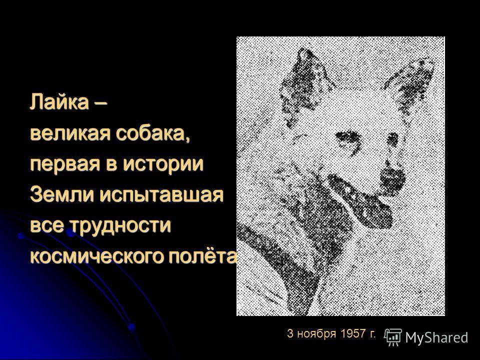 Лайка – великая собака, первая в истории Земли испытавшая все трудности космического полёта 3 ноября 1957 г.