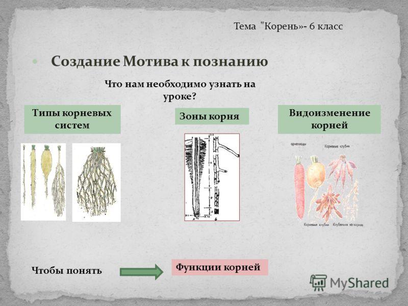 корня Видоизменение корней