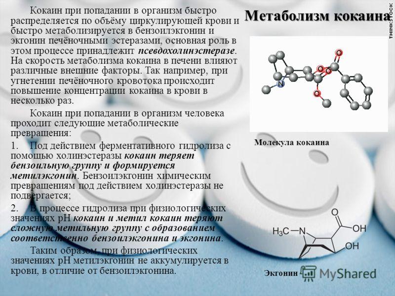 Метаболизм кокаина Молекула кокаина Кокаин при попадании в организм быстро распределяется по объёму циркулирующей крови и быстро метаболизируется в бензоилэкгонин и экгонин печёночными эстеразами, основная роль в этом процессе принадлежит псевдохолин