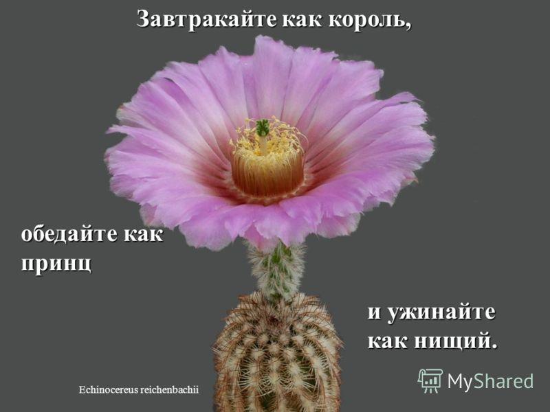 Discocactus horstii Ешьте больше ту еду, которая растет на деревьях и в виде растений, а ту еду, которую производят на заводах, ешьте меньше.