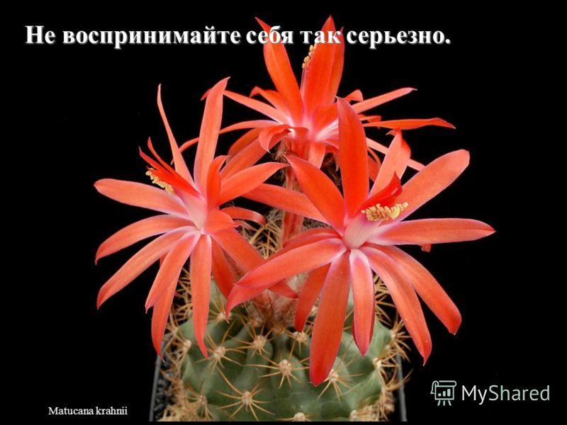 Neowerdermannia vorwerkii Жизнь слишком коротка, чтобы тратить ее на ненависть.