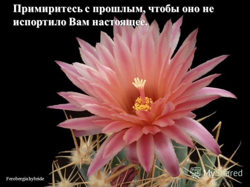 Echinomastus durangensis Не сравнивайте свою жизнь с жизнью других людей. Вы и представления не имеете какова их жизнь на самом деле.