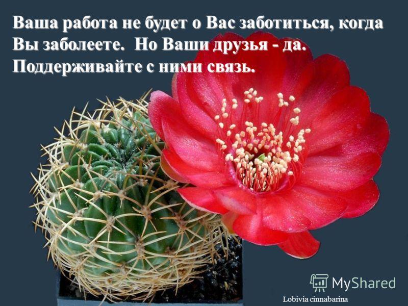 Ferobergia hybride Примиритесь с прошлым, чтобы оно не испортило Вам настоящее.