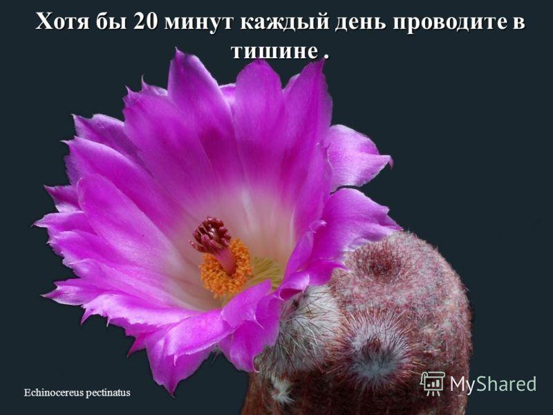 Cochemiea poselgeri Каждый день гуляйте по 10-30 минут. И улыбайтесь во время прогулки.