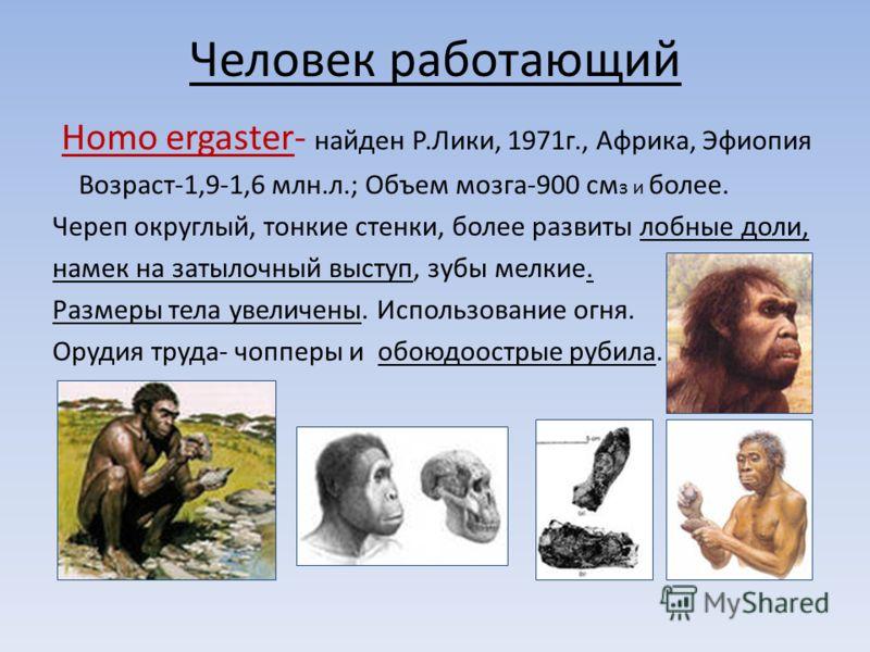 Человек работающий Homo ergaster- найден Р.Лики, 1971г., Африка, Эфиопия Возраст-1,9-1,6 млн.л.; Объем мозга-900 см з и более. Череп округлый, тонкие стенки, более развиты лобные доли, намек на затылочный выступ, зубы мелкие. Размеры тела увеличены.