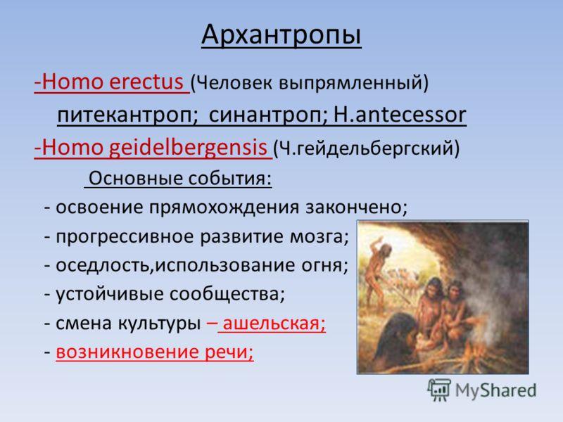 Архантропы -Homo erectus (Человек выпрямленный) питекантроп; синантроп; H.antecessor -Homo geidelbergensis (Ч.гейдельбергский) Основные события: - освоение прямохождения закончено; - прогрессивное развитие мозга; - оседлость,использование огня; - уст