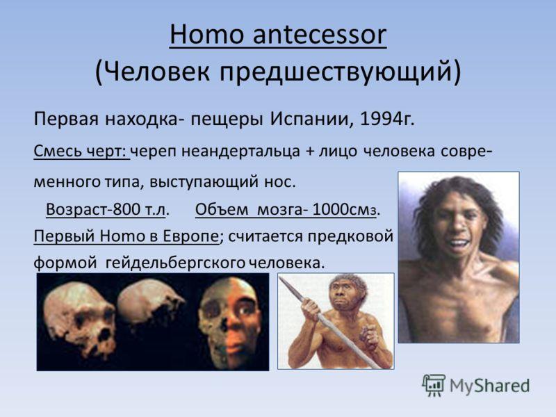 Homo antecessor (Человек предшествующий) Первая находка- пещеры Испании, 1994г. Смесь черт: череп неандертальца + лицо человека совре - менного типа, выступающий нос. Возраст-800 т.л. Объем мозга- 1000см з. Первый Homo в Европе; считается предковой ф