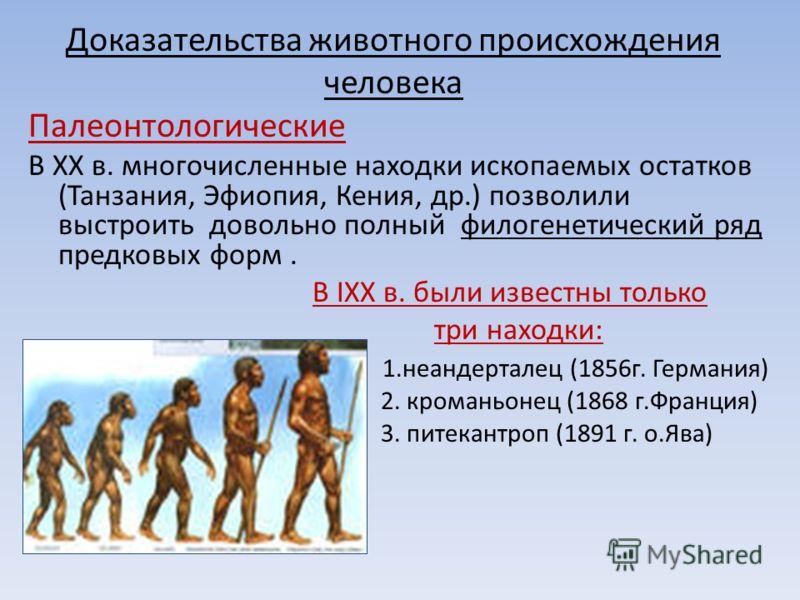 Доказательства животного происхождения человека Палеонтологические В ХХ в. многочисленные находки ископаемых остатков (Танзания, Эфиопия, Кения, др.) позволили выстроить довольно полный филогенетический ряд предковых форм. В IХХ в. были известны толь