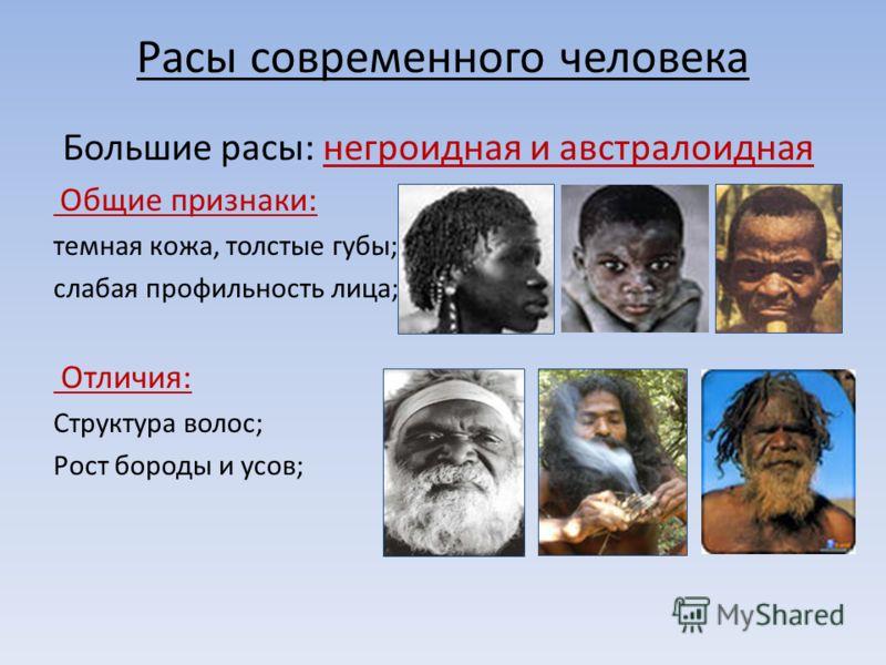 Расы современного человека Большие расы: негроидная и австралоидная Общие признаки: темная кожа, толстые губы; слабая профильность лица; Отличия: Структура волос; Рост бороды и усов;