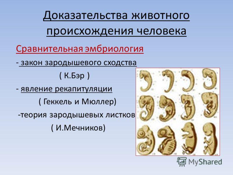 Доказательства животного происхождения человека Сравнительная эмбриология - закон зародышевого сходства ( К.Бэр ) - явление рекапитуляции ( Геккель и Мюллер) -теория зародышевых листков ( И.Мечников)