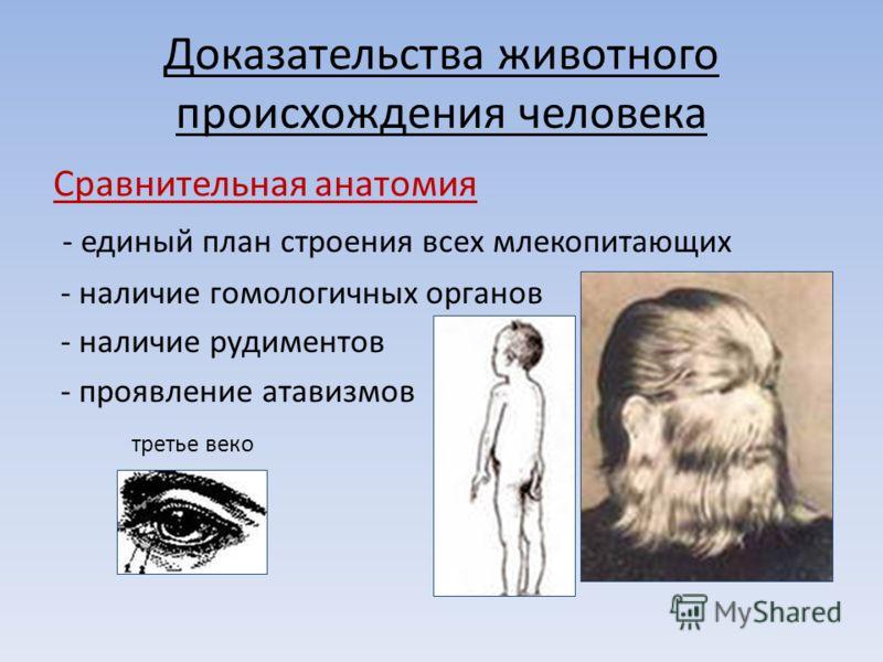 Доказательства животного происхождения человека Сравнительная анатомия - единый план строения всех млекопитающих - наличие гомологичных органов - наличие рудиментов - проявление атавизмов третье веко