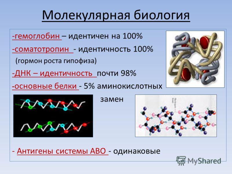 Молекулярная биология -гемоглобин – идентичен на 100% -соматотропин - идентичность 100% (гормон роста гипофиза) -ДНК – идентичность почти 98% - основные белки - 5% аминокислотных замен - Антигены системы АВО - одинаковые
