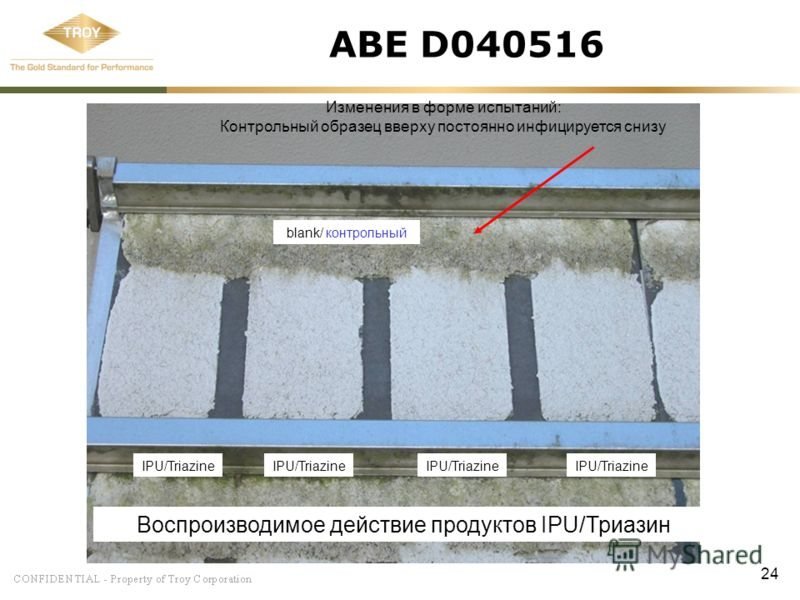 24 ABE D040516 blank/ контрольный IPU/Triazine Воспроизводимое действие продуктов IPU/Триазин Изменения в форме испытаний: Контрольный образец вверху постоянно инфицируется снизу