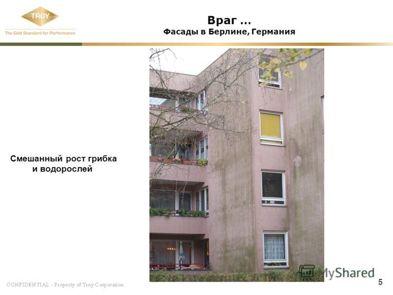 5 Враг … Фасады в Берлине, Германия Смешанный рост грибка и водорослей