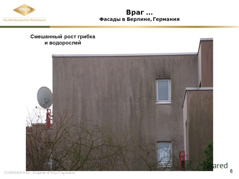 6 Враг … Фасады в Берлине, Германия Смешанный рост грибка и водорослей