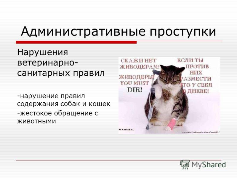 Административные проступки Нарушения ветеринарно- санитарных правил -нарушение правил содержания собак и кошек -жестокое обращение с животными