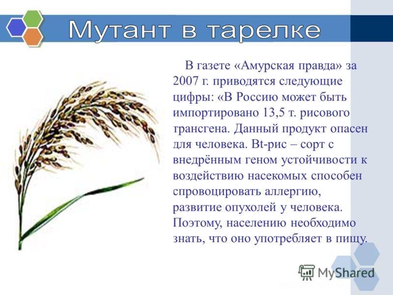В газете «Амурская правда» за 2007 г. приводятся следующие цифры: «В Россию может быть импортировано 13,5 т. рисового трансгена. Данный продукт опасен для человека. Bt-рис – сорт с внедрённым геном устойчивости к воздействию насекомых способен спрово