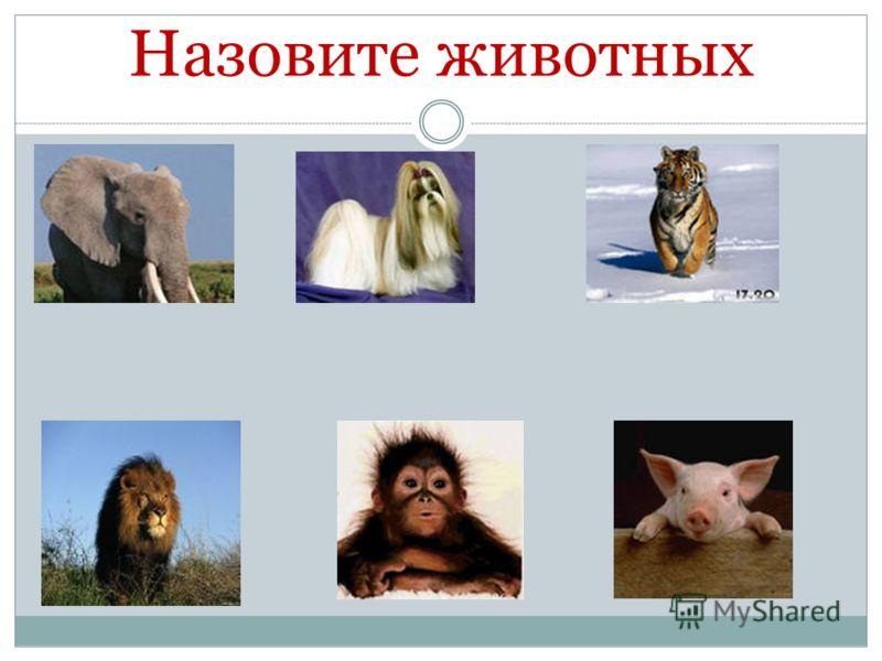 Назовите животных