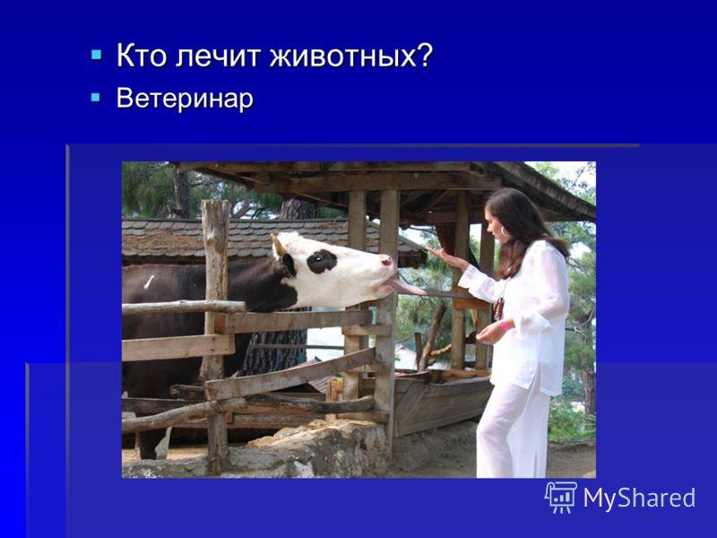 Кто лечит животных? Кто лечит животных? Ветеринар Ветеринар