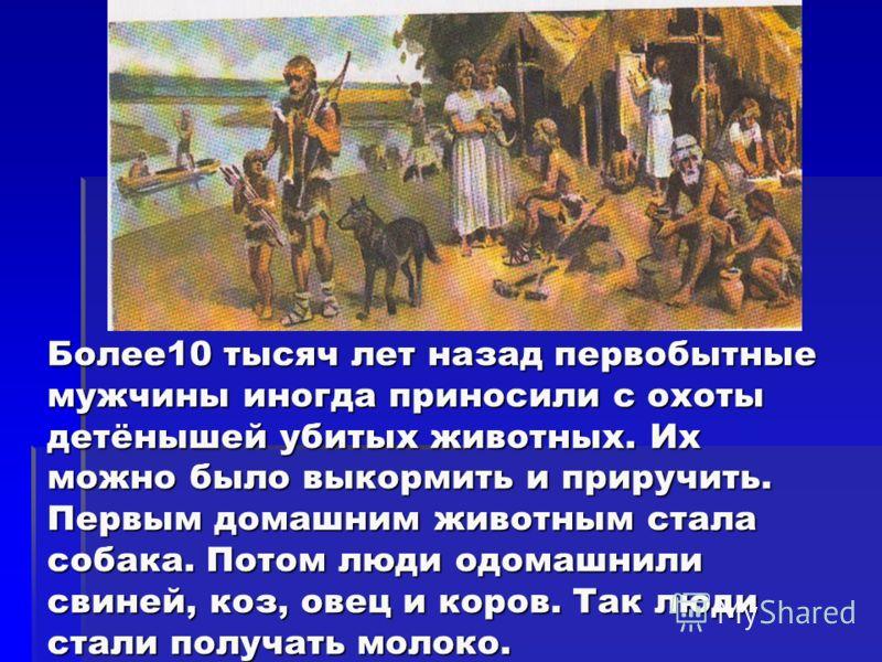 Более10 тысяч лет назад первобытные мужчины иногда приносили с охоты детёнышей убитых животных. Их можно было выкормить и приручить. Первым домашним животным стала собака. Потом люди одомашнили свиней, коз, овец и коров. Так люди стали получать молок