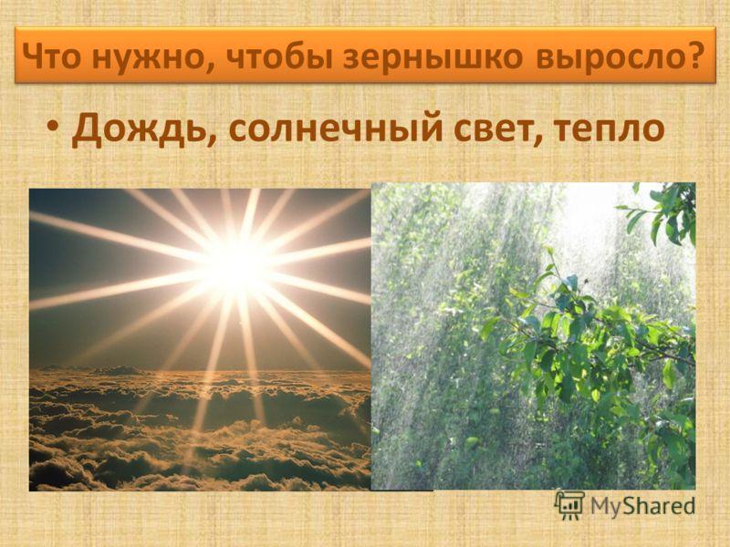 Дождь, солнечный свет, тепло Что нужно, чтобы зернышко выросло?