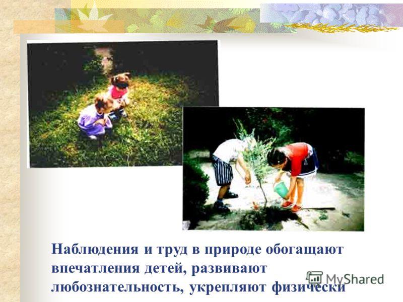 Наблюдения и труд в природе обогащают впечатления детей, развивают любознательность, укрепляют физически