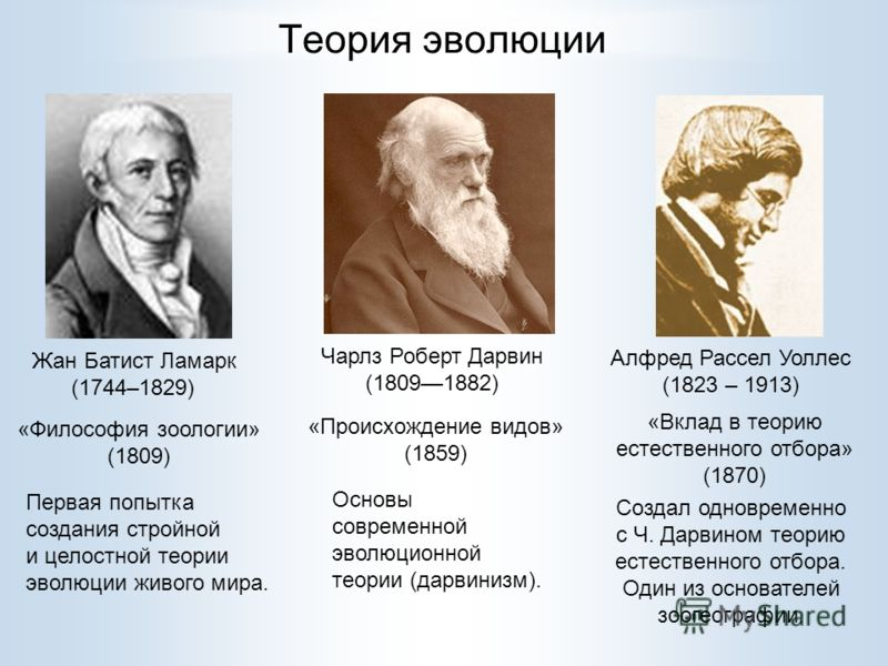 Теория эволюции Чарлз Роберт Дарвин (18091882) Жан Батист Ламарк (1744–1829) Первая попытка создания стройной и целостной теории эволюции живого мира. Основы современной эволюционной теории (дарвинизм). Алфред Рассел Уоллес (1823 – 1913) Создал однов