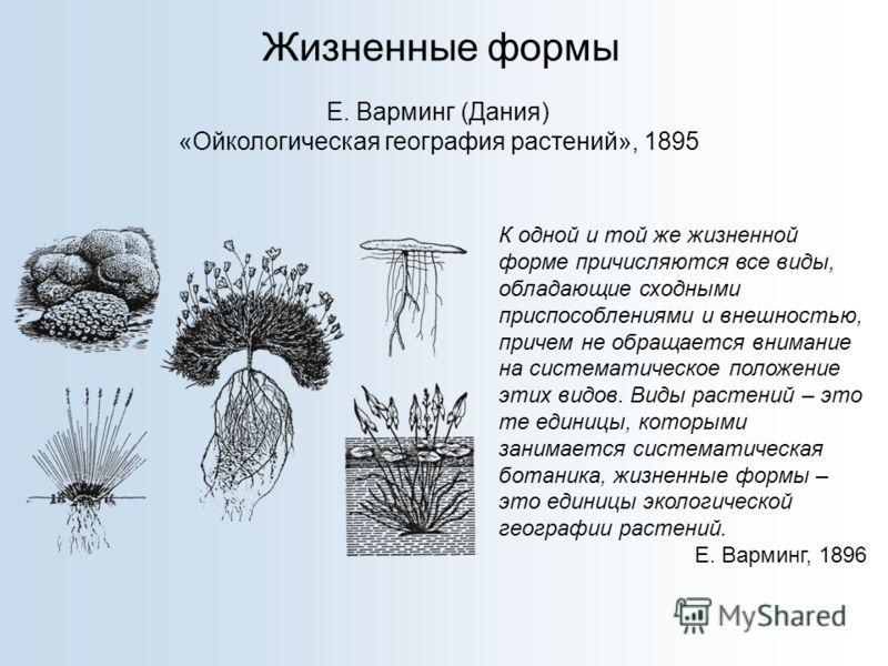 Жизненные формы Е. Варминг (Дания) «Ойкологическая география растений», 1895 К одной и той же жизненной форме причисляются все виды, обладающие сходными приспособлениями и внешностью, причем не обращается внимание на систематическое положение этих ви