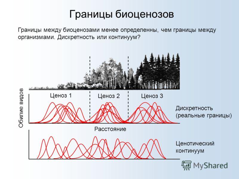 Границы биоценозов Границы между биоценозами менее определенны, чем границы между организмами. Дискретность или континуум? Ценоз 1 Ценоз 2Ценоз 3 Расстояние Обилие видов Дискретность (реальные границы) Ценотический континуум