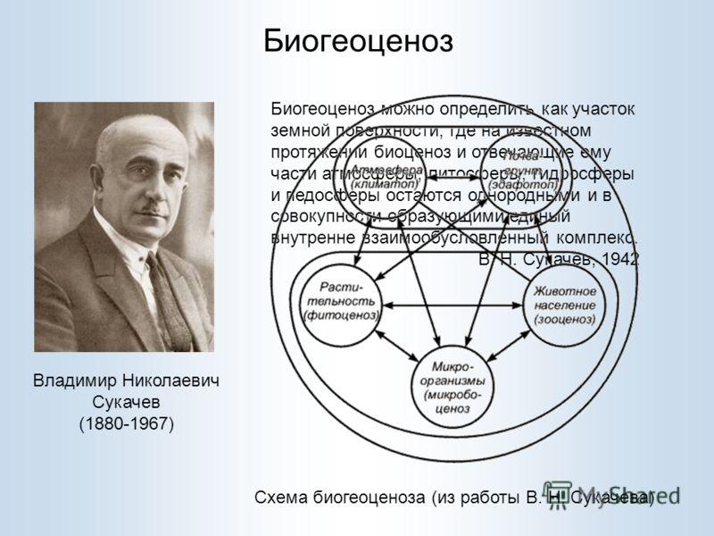 Биогеоценоз Владимир Николаевич Сукачев (1880-1967) Биогеоценоз можно определить как участок земной поверхности, где на известном протяжении биоценоз и отвечающие ему части атмосферы, литосферы, гидросферы и педосферы остаются однородными и в совокуп