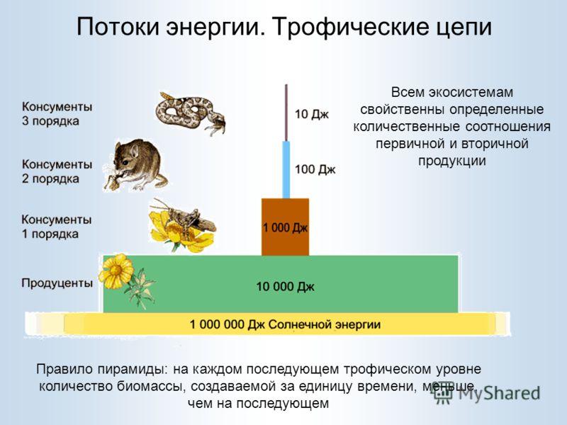Потоки энергии. Трофические цепи Правило пирамиды: на каждом последующем трофическом уровне количество биомассы, создаваемой за единицу времени, меньше, чем на последующем Всем экосистемам свойственны определенные количественные соотношения первичной