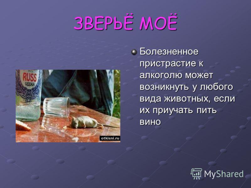 ЗВЕРЬЁ МОЁ Болезненное пристрастие к алкоголю может возникнуть у любого вида животных, если их приучать пить вино