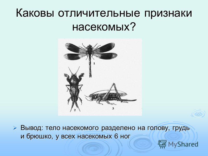 Каковы отличительные признаки насекомых? Вывод: тело насекомого разделено на голову, грудь и брюшко, у всех насекомых 6 ног Вывод: тело насекомого разделено на голову, грудь и брюшко, у всех насекомых 6 ног