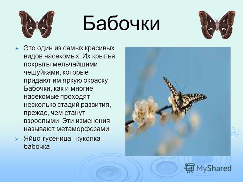 Бабочки Это один из самых красивых видов насекомых. Их крылья покрыты мельчайшими чешуйками, которые придают им яркую окраску. Бабочки, как и многие насекомые проходят несколько стадий развития, прежде, чем станут взрослыми. Эти изменения называют ме