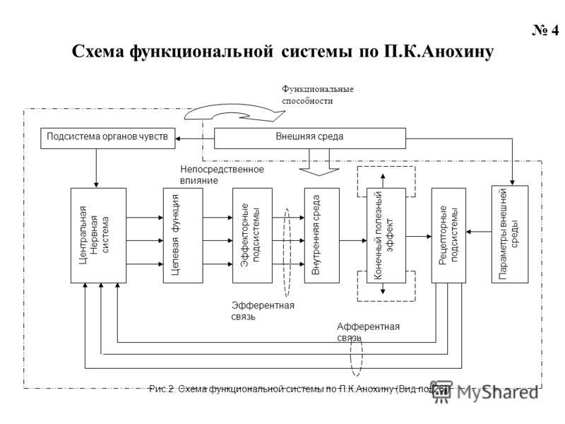 4 Схема функциональной системы по П.К.Анохину Центральная Нервная система Целевая функция Эффекторные подсистемы Внутренняя среда Конечный полезный эффект Рецепторные подсистемы Параметры внешней среды Внешняя среда Рис.2. Схема функциональной систем
