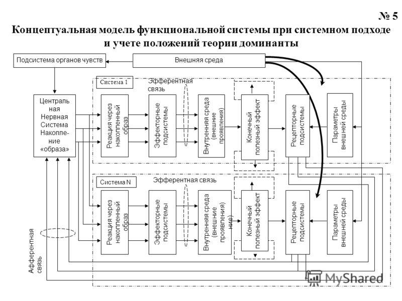 5 Концептуальная модель функциональной системы при системном подходе и учете положений теории доминанты Эфферентная связь Система 1 Централь ная Нервная Система Накопле- ние «образа » Реакция через накопленный образ Эффекторные подсистемы Внутренняя