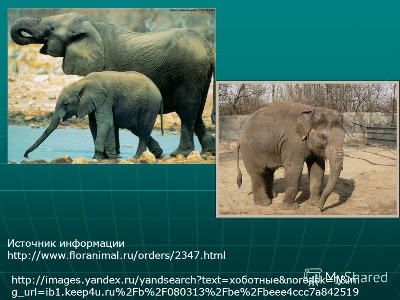 Источник информации http://www.floranimal.ru/orders/2347.html http://images.yandex.ru/yandsearch?text=хоботные&noreask=1&im g_url=ib1.keep4u.ru%2Fb%2F080313%2Fbe%2Fbeee4ccc7a842519