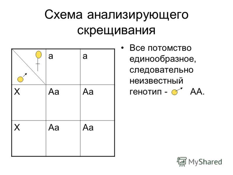 Схема анализирующего скрещивания Все потомство единообразное, следовательно неизвестный генотип - АА. аа ХАа Х