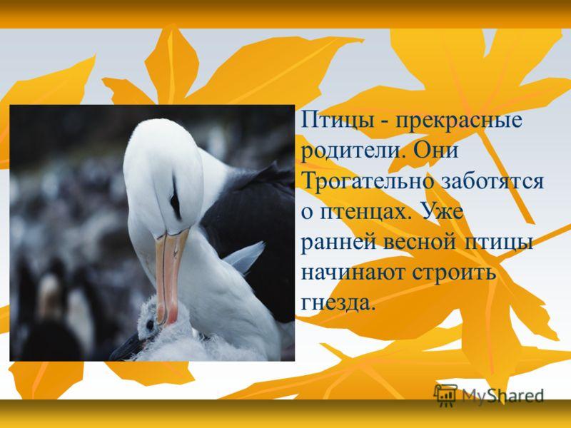 Птицы - прекрасные родители. Они Трогательно заботятся о птенцах. Уже ранней весной птицы начинают строить гнезда.