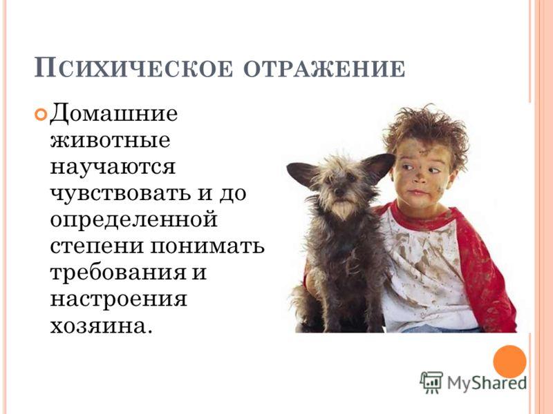 П СИХИЧЕСКОЕ ОТРАЖЕНИЕ Домашние животные научаются чувствовать и до определенной степени понимать требования и настроения хозяина.