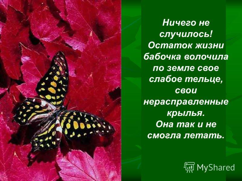 Человек продолжал наблюдать, думая, что вот-вот крылья бабочки расправятся и окрепнут и она сможет летать.