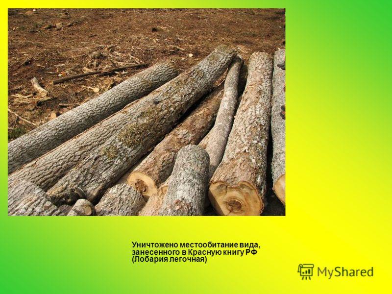 Уничтожено местообитание вида, занесенного в Красную книгу РФ (Лобария легочная)