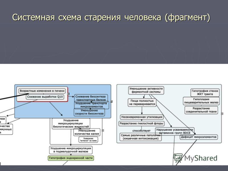 Системная схема старения человека (фрагмент)