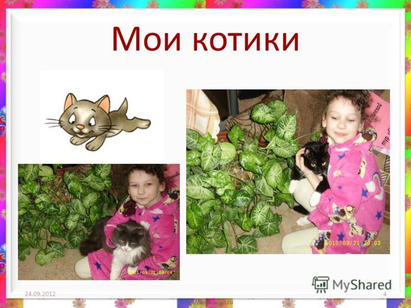 Мои котики 24.09.20124