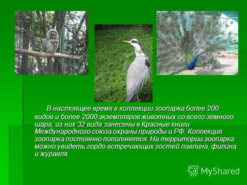 В настоящее время в коллекции зоопарка более 200 видов и более 2000 экземпляров животных со всего земного шара, из них 32 вида занесены в Красные книги Международного союза охраны природы и РФ. Коллекция зоопарка постоянно пополняется. На территории