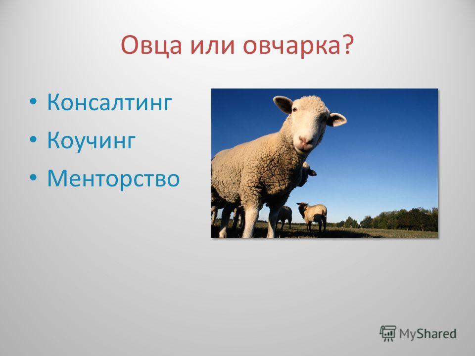 Овца или овчарка ? Консалтинг Коучинг Менторство