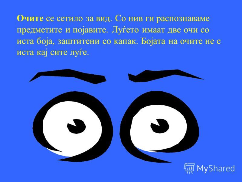 Човекот има пет сетила. Тие се: Сетило за вид (очи) Сетило за слух (уши) Сетило за мирис (нос) Сетило за вкус (јазик) Сетило за допир (кожа) Секое сетило е поврзано со нашите органи.