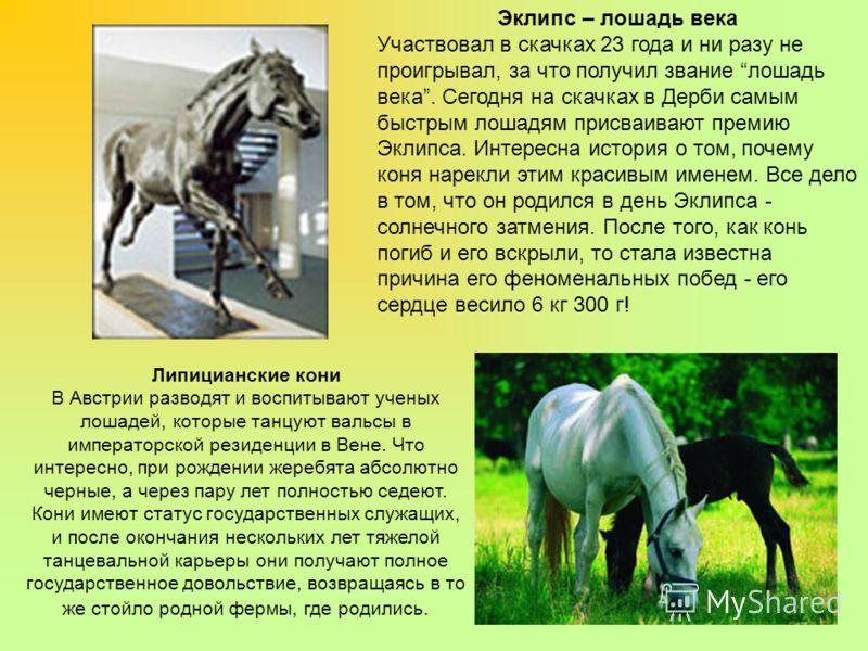 Эклипс – лошадь века Участвовал в скачках 23 года и ни разу не проигрывал, за что получил звание лошадь века. Сегодня на скачках в Дерби самым быстрым лошадям присваивают премию Эклипса. Интересна история о том, почему коня нарекли этим красивым имен